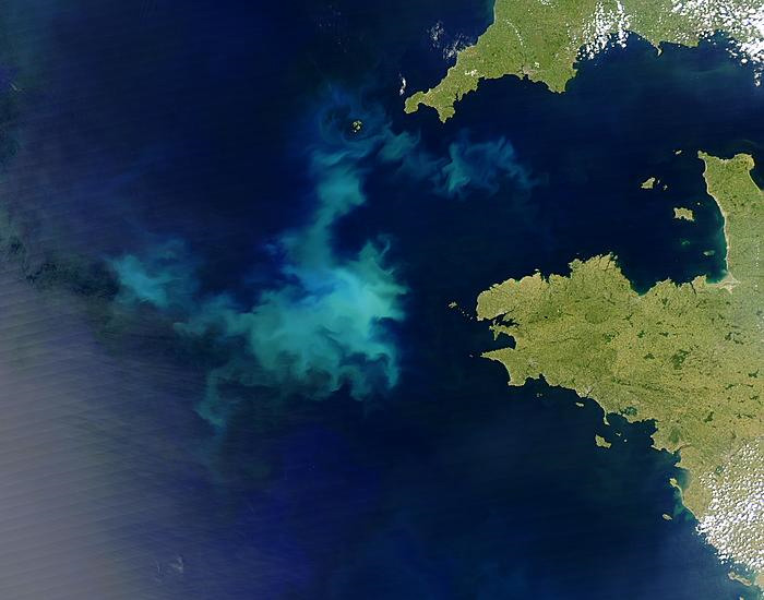 Satellitenbild einer Algenblüte vor der Bretagne. Foto: NASA